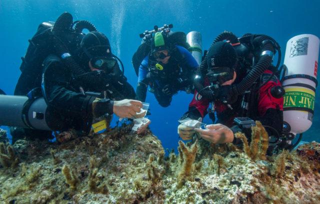 Οι δύτες επιθεωρούν μικρά ευρήματα από το ναυάγιο κατά τη διάρκεια στάσης αποσυμπίεσης, μετά την κατάδυση στα 50 μ. βάθος (Φωτο: Brett Seymour, © EUA/WHOI/ARGO)